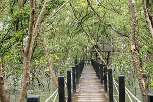 passerelle dans la forêt de mangrove