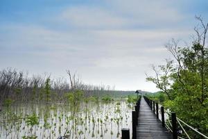 passerelle dans la forêt de mangrove photo