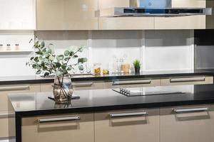plante sur le comptoir de la cuisine