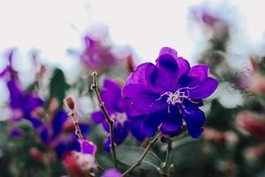fleurs d'hiver pendant la saison des pluies avec flou d'arrière-plan photo