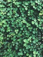 petite plante à feuilles vertes photo