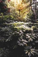 vue sur la jungle tropicale photo