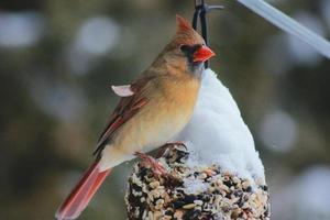 oiseau orange et rouge sur décor suspendu photo