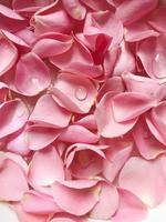 groupe de pétales roses photo