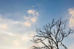 arbre sec avec ciel bleu photo