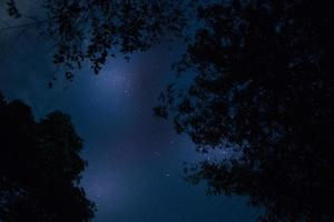 silhouette d'arbres la nuit photo