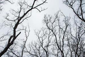 arbres secs et ciel gris