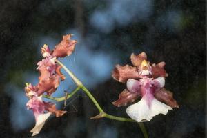 fleurs d'orchidées brunes photo