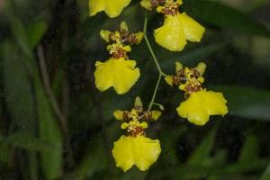 fleur d'orchidée jaune photo