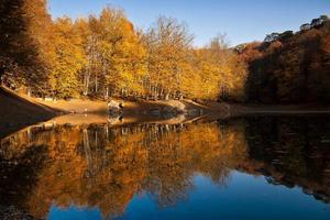 lac dans la forêt