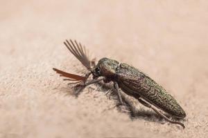 Cliquez sur coléoptère sur fond marron photo