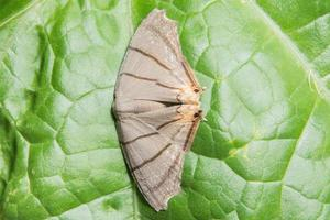 papillon de nuit sur une feuille
