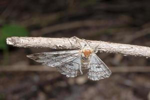 papillon de nuit sur une branche photo