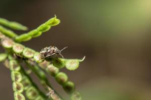 Punaise prédatrice sur une plante