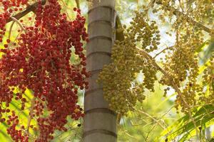 palmier de cire dans la forêt photo