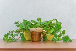 tasse à café et plantes sur le bureau photo