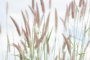 gros plan de fleurs d'herbe photo