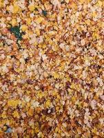 feuilles d'automne tombées photo