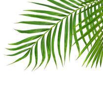 gros plan, de, feuilles de palmier