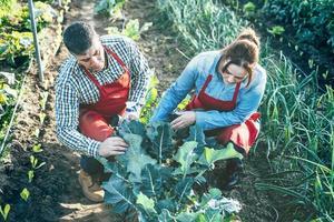 Couple d'agriculteurs examinant une plante de brocoli dans un champ cultivé photo