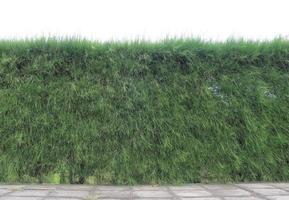 Jardin vertical de mur de branche de pin photo