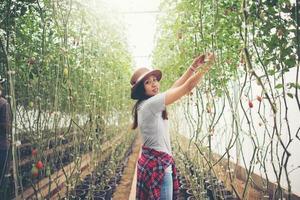 Jeune femme dans une serre avec récolte de tomates biologiques photo