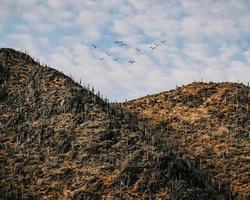 volée d'oiseaux survolant la montagne pendant la journée photo