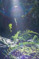 plante de fougère verte photo