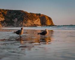 trois oiseaux sur le rivage pendant la journée photo