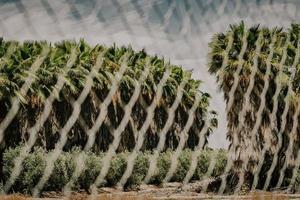 Plante de cactus vert sur un sol brun sous un ciel bleu pendant la journée photo