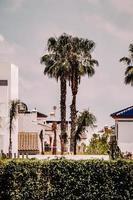 Orihuela, Espagne, 2020 - Palmier vert près d'un bâtiment en béton brun pendant la journée photo