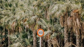 Panneau de signalisation blanc et orange près de palmiers