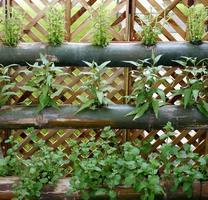 potager vertical de légumes photo