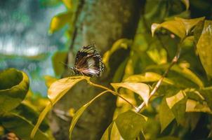 Jardin aux papillons de l'île de Bantayan photo