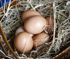 Oeufs bruns dans un nid de foin panier en bois photo