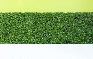Plante de feuilles vertes sur mur de jardin vertical photo