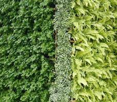 mur vertical de plante verte photo