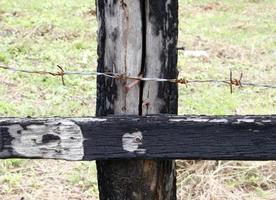 Fil d'épine de clôture sur montant en bois