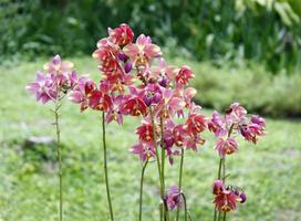 mélange de belles orchidées photo