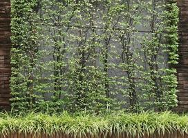 mur de béton avec des feuilles vertes photo