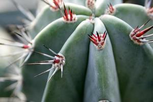 pointes sur un cactus