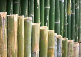 clôture en bambou coupée
