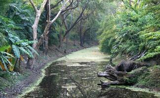 backwaters dans la jungle