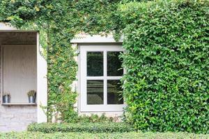 Vue de la façade de la maison en brique avec mur et fenêtres, couverte de plantes grimpantes envahies