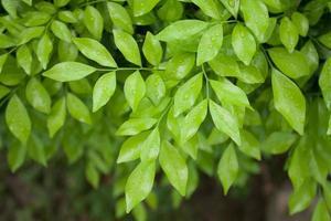 feuilles vertes fraîches