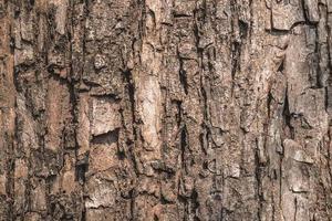 surface de l'écorce des arbres photo