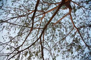 branches de l'arbre photo