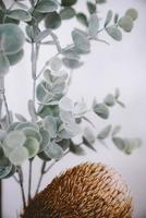 décor végétal d'eucalyptus