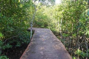 passerelle en bois en forêt