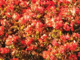 fleurs dans le jardin extérieur photo